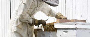 Vestimenta do apicultor e o fole ou fumigador - fumegador