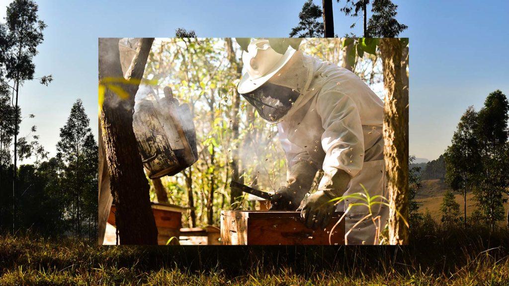 mel-abelha-puro-apicultura